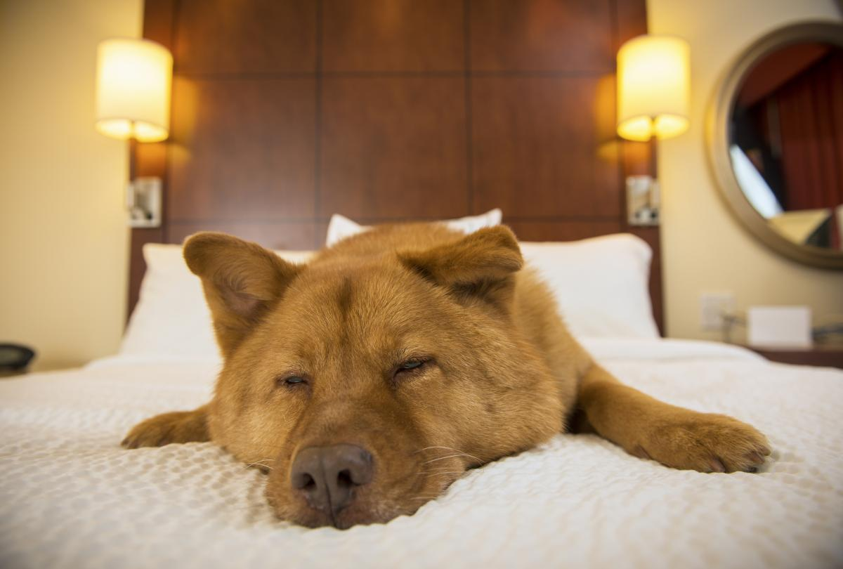 banner of Pet Friendly Hotel Chains Worth Checking Out