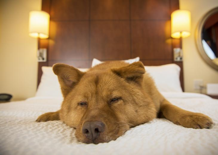 thumbnail of Pet Friendly Hotel Chains Worth Checking Out
