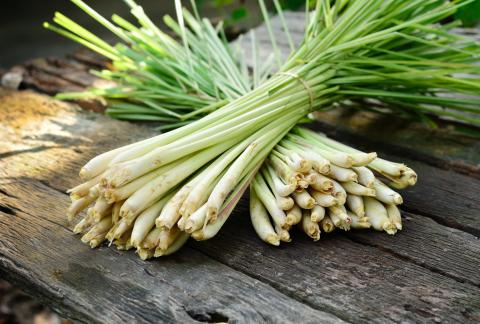square of Lemongrass Has Some Surprising Health Benefits